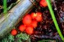Fungi love rain