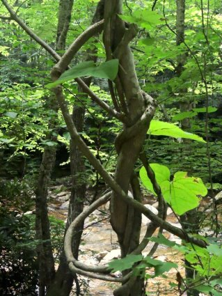 Woodland Sculpture