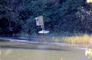 Almost Submerged Duck House